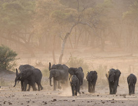 Elephant´s Eye, Hwange